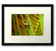 Hang on there 01 Framed Print