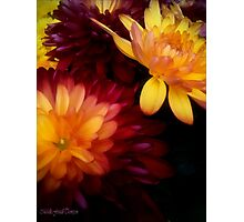 Colorful Mums Photographic Print
