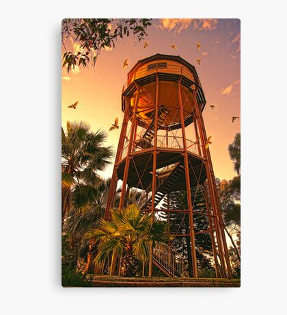 Golden  Aerie Canvas Print