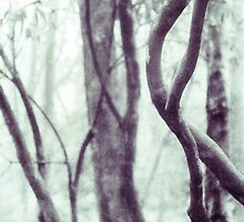Woodland Photographic Artwork by Natalie Kinnear