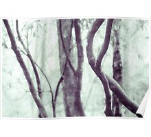 Woodland Photographic Artwork Poster
