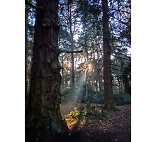 Shining Woodlands Photographic Print
