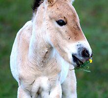 horse by pierre schwartz