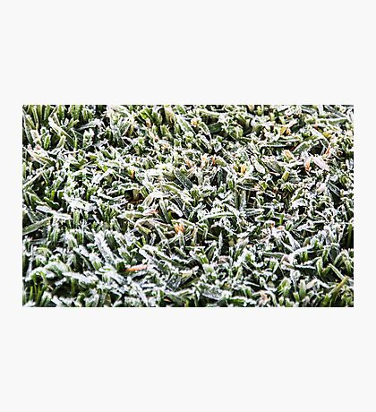 OMG! San Diego Frost???? Photographic Print