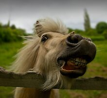 Funny Horse by Graham McAndrew