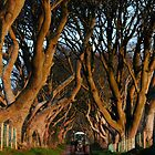 Dark Hedges Overbearing by Wrayzo