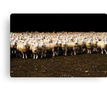 Photo Shooting of 2000 Sheeps Canvas Print