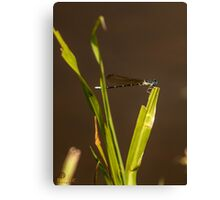 Dragonfly over muddy waters Canvas Print