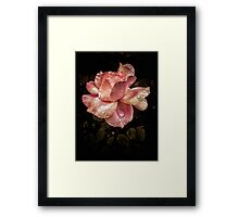 Rose petals with raindrops Framed Print