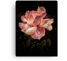 Rose petals with raindrops Canvas Print