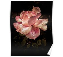 Rose petals with raindrops Poster