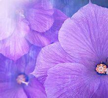 Hibiscus Alyogyne huegelii by Martina Cross