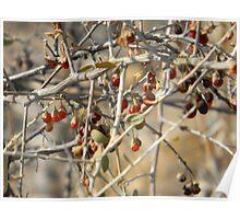 Sonoran Desert Wild Berries Poster