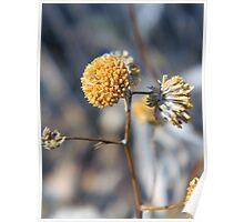 Desert Weed Bloom Poster