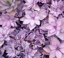 Hydrangea Flowers by Martina Cross
