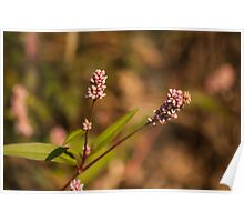 A sprig of pink Poster