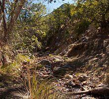 Hiking in Madera Canyon, Arizona by Lucinda Walter