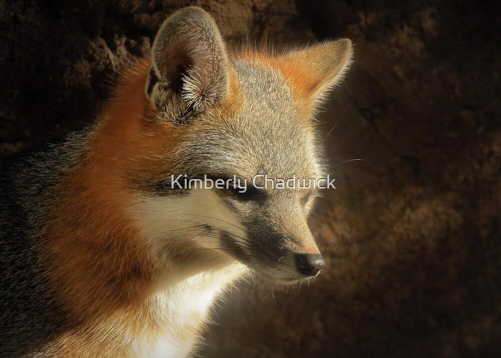 Gray Fox by Kimberly Chadwick