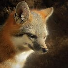 Gray Fox by Kimberly Chadwick