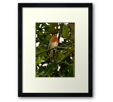 Robin & Holly Framed Print