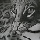 Clouded Leopard by Beth Haywood