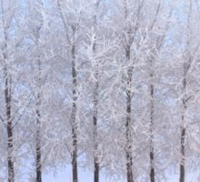 Frozen Poplar Trees II, Northern Ireland Sticker