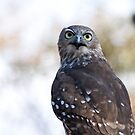Bird of Prey by Stephen Dean