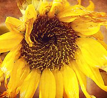 Grunge Sunflower by afeimages