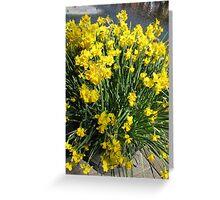 Heralds of Spring - Keukenhof Daffodil Display Greeting Card
