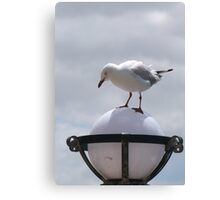 'OOPS! SLIP SLIDING AWAY!'  Seagul tries to land on lampstand. Geelong Waterfront. Canvas Print