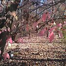 Pink Leaves by Blue Skye Art  & Photography