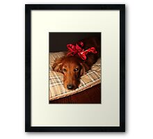 Present dog with red ribbon Framed Print
