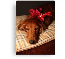 Present dog with red ribbon Canvas Print
