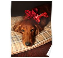 Present dog with red ribbon Poster