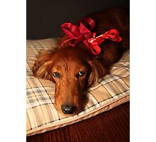 Present dog with red ribbon Photographic Print