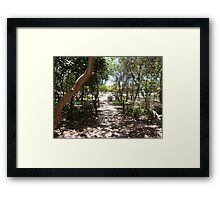 Two Bent Trees! Framed Print