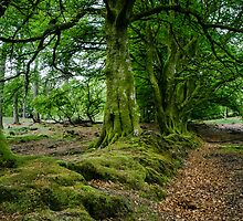 Woodland Scene, Scotland. UK by Heidi Stewart