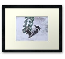 Winter Survival Framed Print