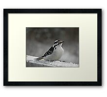 Male Downey Woodpecker on Ice Crystals Framed Print