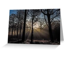 Isle Adam forest in décember Greeting Card