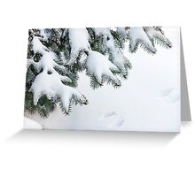 Snow on winter evergreen branches Greeting Card