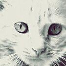 Kitty's little girl :) by Vandana Indramohan