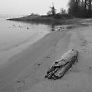 Driftwood On The Beach by WildestArt