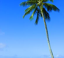 Palm Tree, Waimea Bay, Oahu, Hawaii by boogeyman