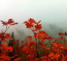 Fall in Alpine Lakes Wilderness by Onna Jeanna Voellmer