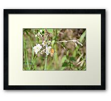 Small Heath Butterfly Framed Print