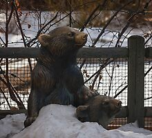 Bears at the Zoo by Jarrett720