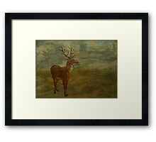 Looking for Landseer Framed Print