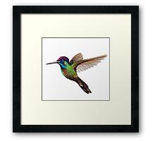 Hummingbird Sue Framed Print