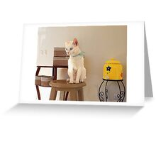 young cat at the water cooler Greeting Card